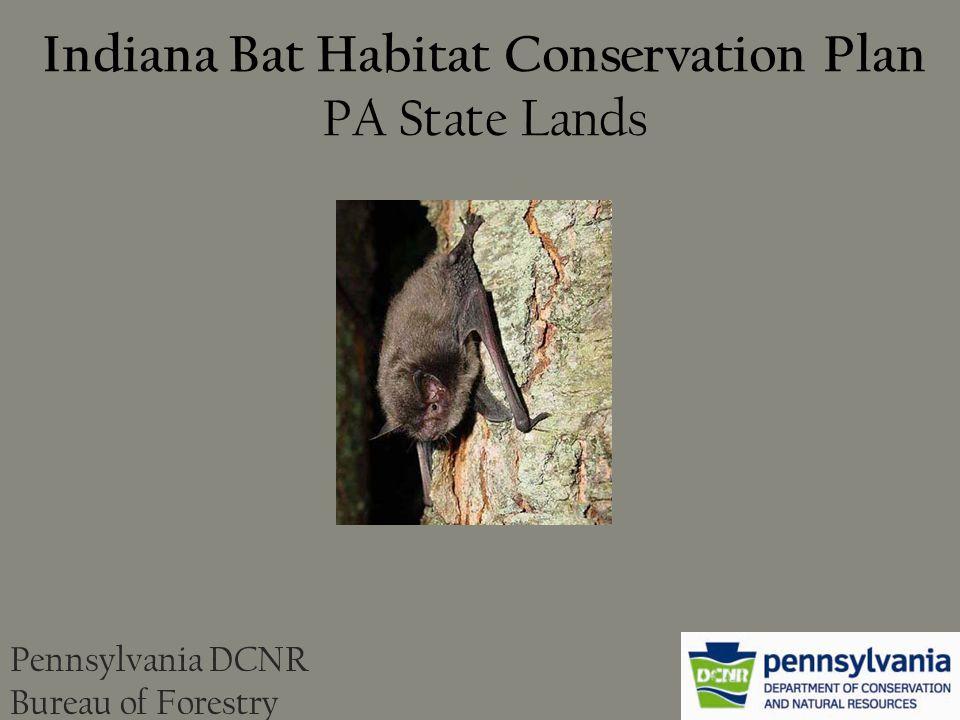 Indiana Bat Habitat Conservation Plan PA State Lands Pennsylvania DCNR Bureau of Forestry