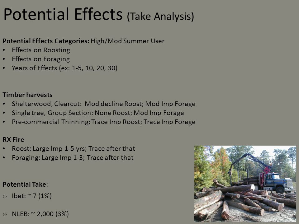 Potential Effects Categories: High/Mod Summer User Effects on Roosting Effects on Foraging Years of Effects (ex: 1-5, 10, 20, 30) Timber harvests Shelterwood, Clearcut: Mod decline Roost; Mod Imp Forage Single tree, Group Section: None Roost; Mod Imp Forage Pre-commercial Thinning: Trace Imp Roost; Trace Imp Forage RX Fire Roost: Large Imp 1-5 yrs; Trace after that Foraging: Large Imp 1-3; Trace after that Potential Take: o Ibat: ~ 7 (1%) o NLEB: ~ 2,000 (3%) Potential Effects (Take Analysis)