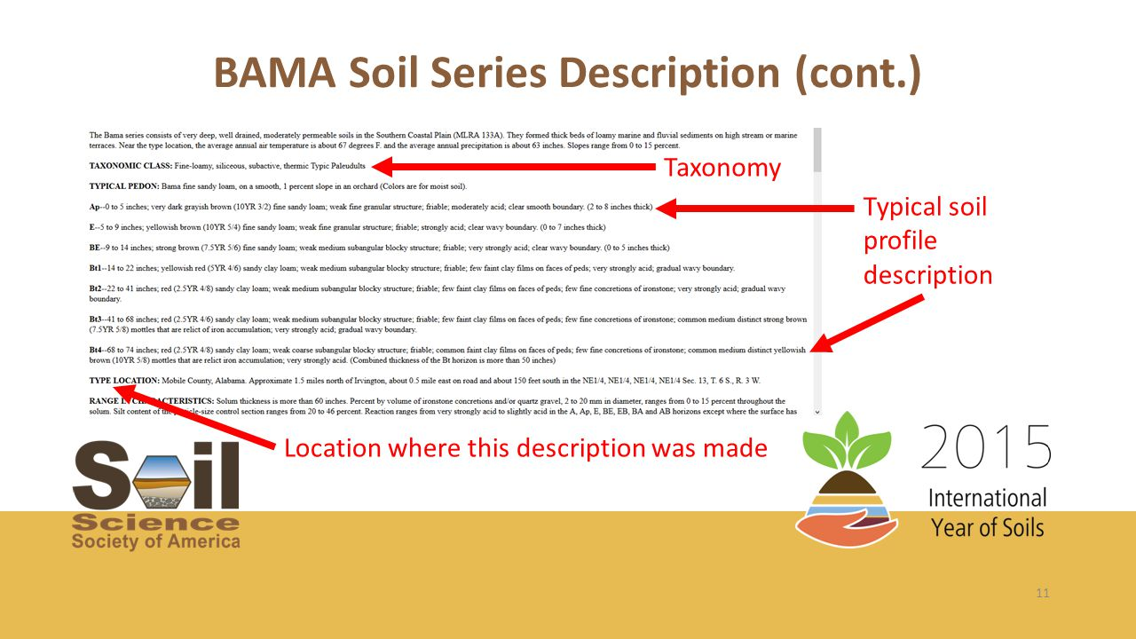 11 Typical soil profile description Location where this description was made Taxonomy BAMA Soil Series Description (cont.)