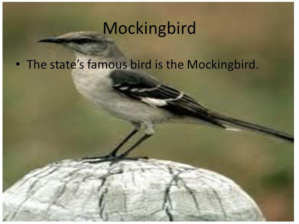 Mockingbird The state's famous bird is the Mockingbird.
