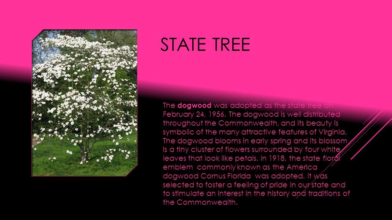 STATE BIRD Virginia designated the northern cardinal (Cardinalis cardinalis) as official state bird in 1950.