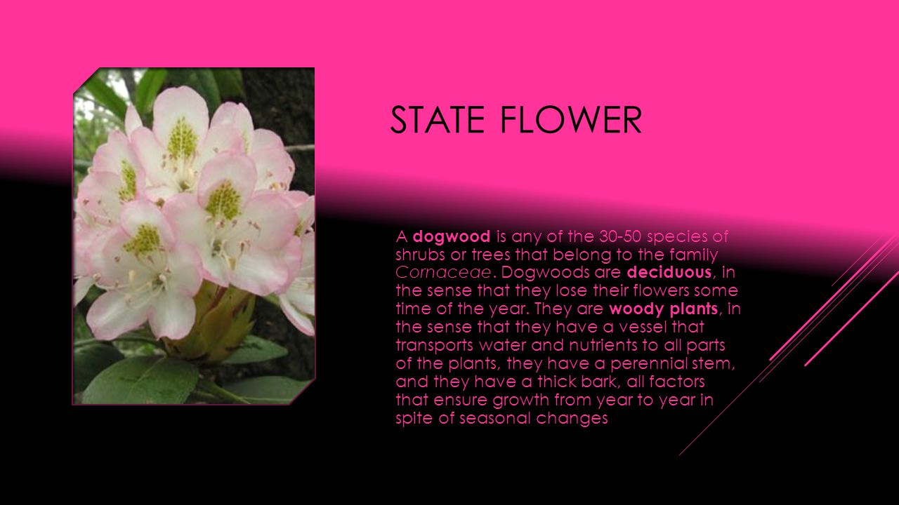 STATE FLOWER A dogwood is any of the 30-50 species of shrubs or trees that belong to the family Cornaceae.