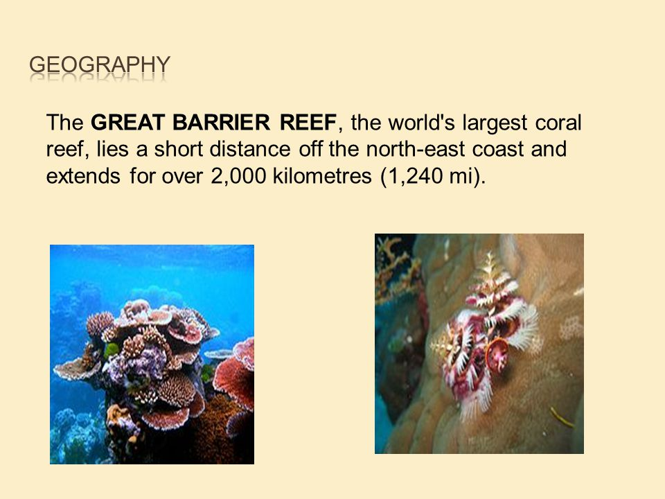 The GREAT BARRIER REEF, the world s largest coral reef, lies a short distance off the north-east coast and extends for over 2,000 kilometres (1,240 mi).