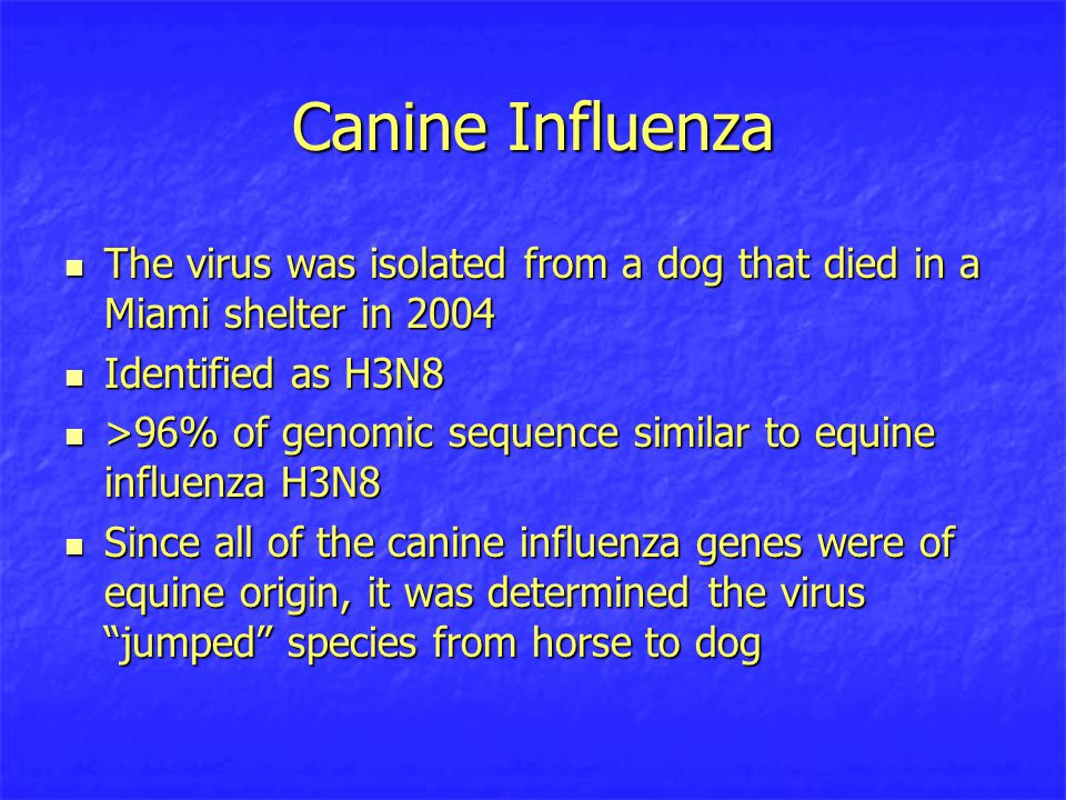 Canine Influenza The virus was isolated from a dog that died in a Miami shelter in 2004 The virus was isolated from a dog that died in a Miami shelter in 2004 Identified as H3N8 Identified as H3N8 >96% of genomic sequence similar to equine influenza H3N8 >96% of genomic sequence similar to equine influenza H3N8 Since all of the canine influenza genes were of equine origin, it was determined the virus jumped species from horse to dog Since all of the canine influenza genes were of equine origin, it was determined the virus jumped species from horse to dog
