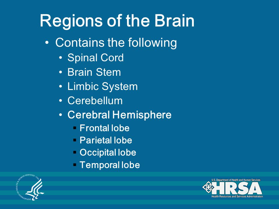 Cerebral Hemispheres These hemispheres cover and obscure the top of the brain stem.