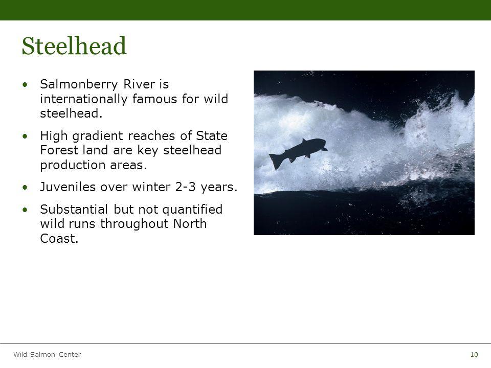 Wild Salmon Center10 Steelhead Salmonberry River is internationally famous for wild steelhead.