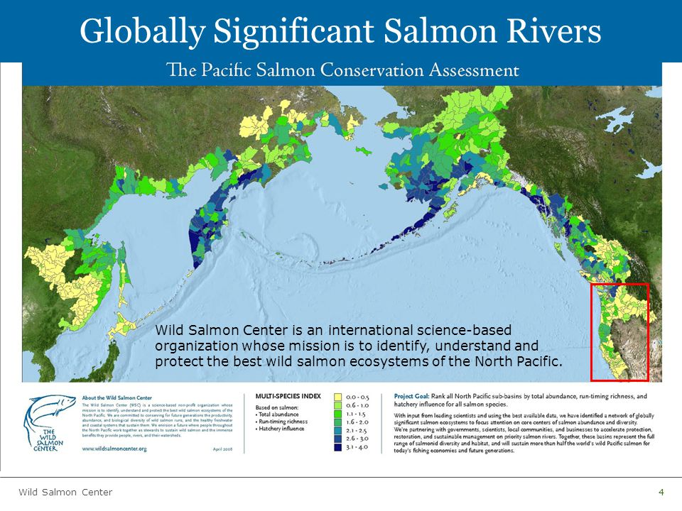 Wild Salmon Center4 Globally Significant Salmon Rivers Wild Salmon Center is an international science-based organization whose mission is to identify, understand and protect the best wild salmon ecosystems of the North Pacific.