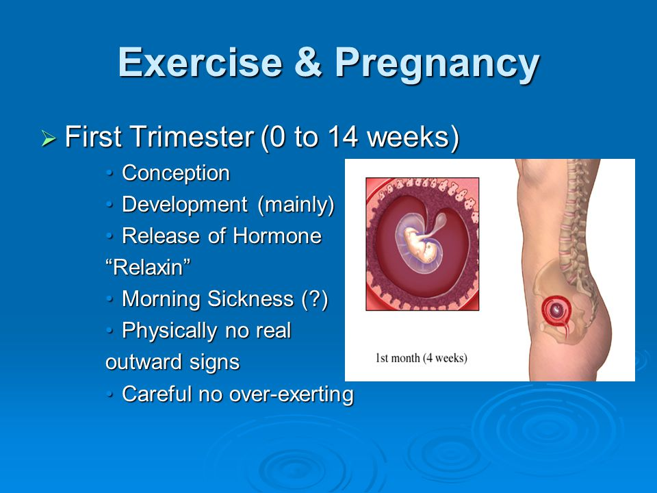 Exercise & Pregnancy  First Trimester (0 to 14 weeks) ConceptionConception Development (mainly)Development (mainly) Release of HormoneRelease of Hormone Relaxin Morning Sickness ( )Morning Sickness ( ) Physically no realPhysically no real outward signs Careful no over-exertingCareful no over-exerting