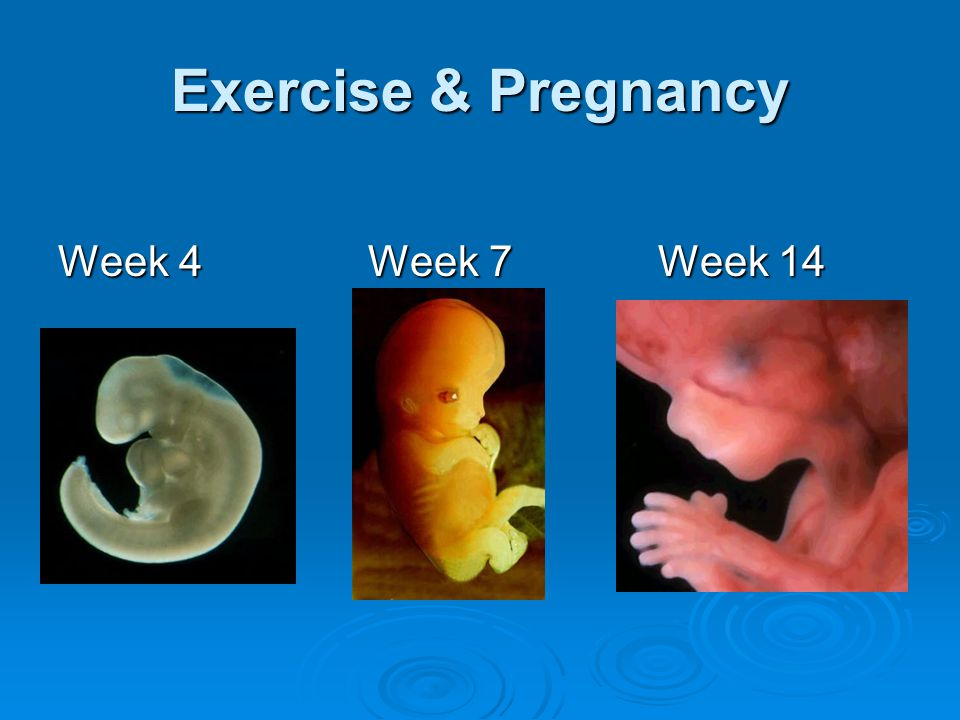 Exercise & Pregnancy Week 4 Week 7 Week 14
