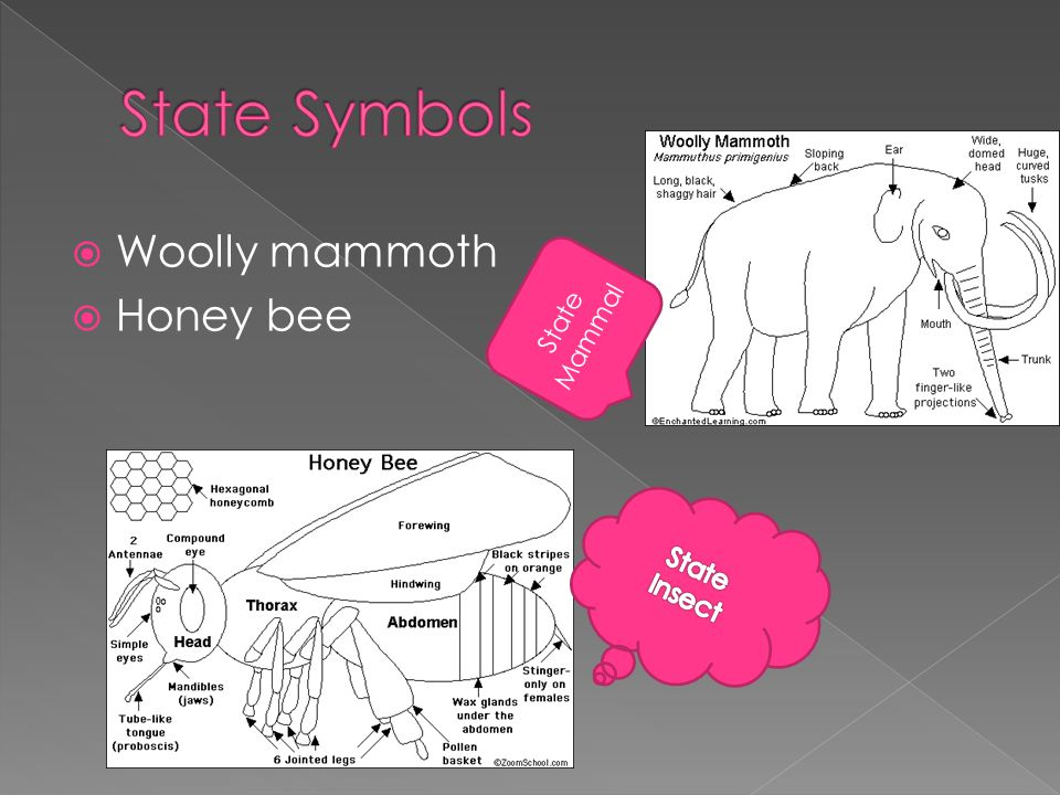  Woolly mammoth  Honey bee State Mammal