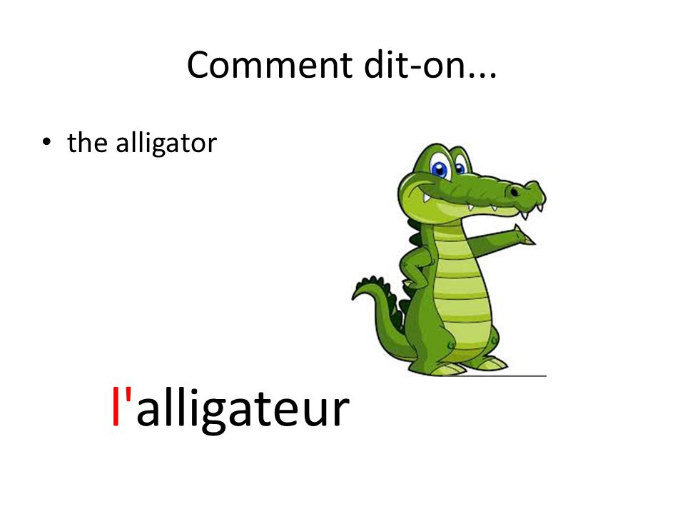 Comment dit-on... the alligator l alligateur