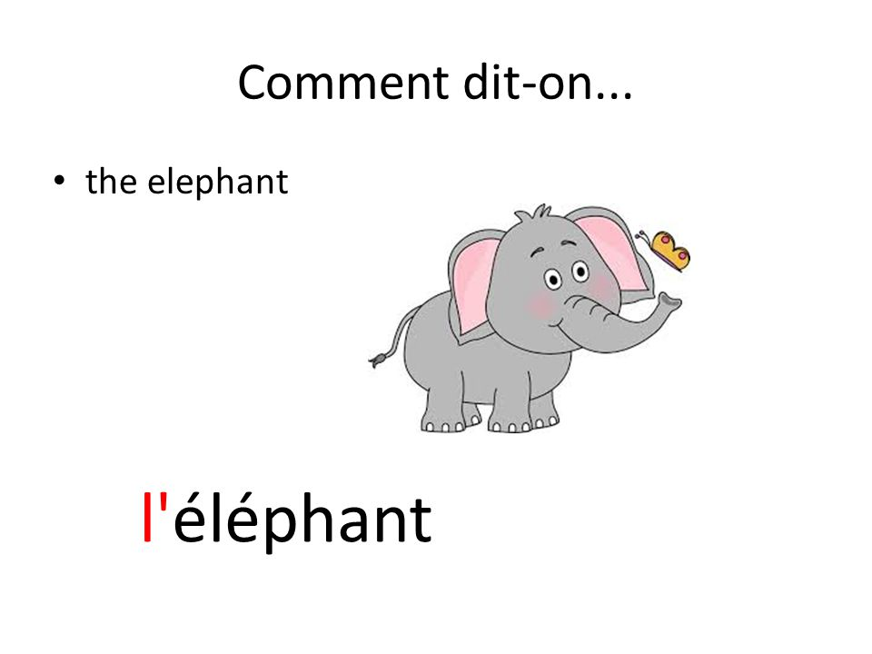 Comment dit-on... the elephant l éléphant