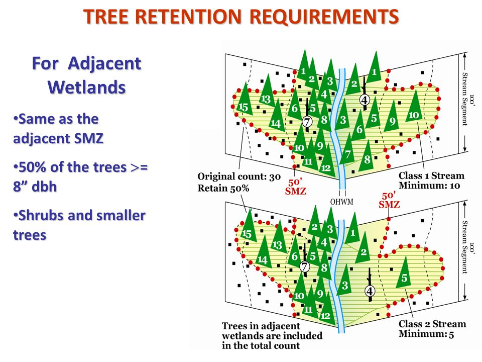 For Adjacent Wetlands Same as the adjacent SMZ Same as the adjacent SMZ 50% of the trees  = 8 dbh 50% of the trees  = 8 dbh Shrubs and smaller trees Shrubs and smaller trees TREE RETENTION REQUIREMENTS