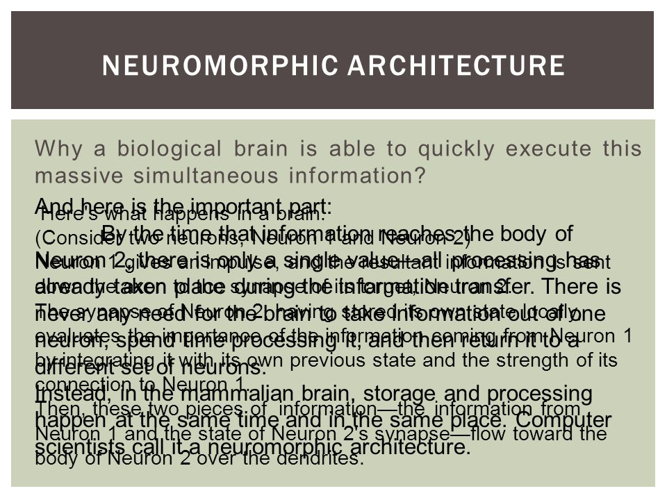 Why a biological brain is able to quickly execute this massive simultaneous information.