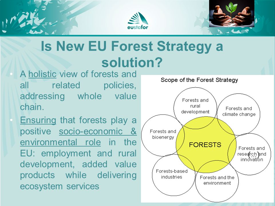 11 Is New EU Forest Strategy a solution.