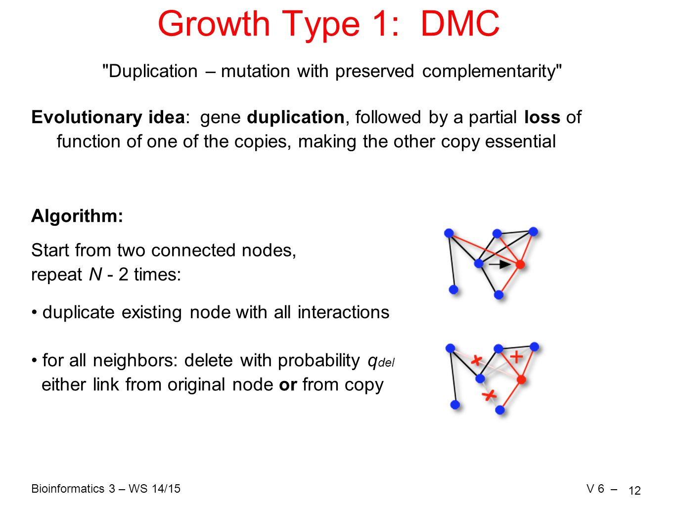 Bioinformatics 3 – WS 14/15V 6 – 12 Growth Type 1: DMC Duplication – mutation with preserved complementarity Evolutionary idea: gene duplication, followed by a partial loss of function of one of the copies, making the other copy essential Algorithm: duplicate existing node with all interactions for all neighbors: delete with probability q del either link from original node or from copy Start from two connected nodes, repeat N - 2 times: