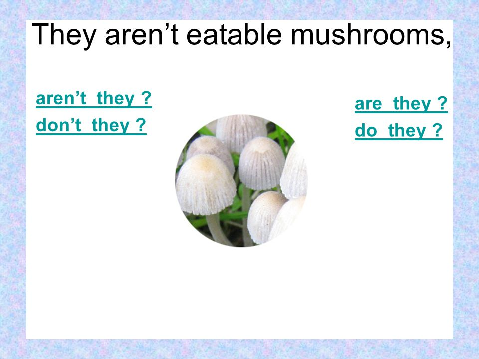 aren't they don't they are they do they They aren't eatable mushrooms,