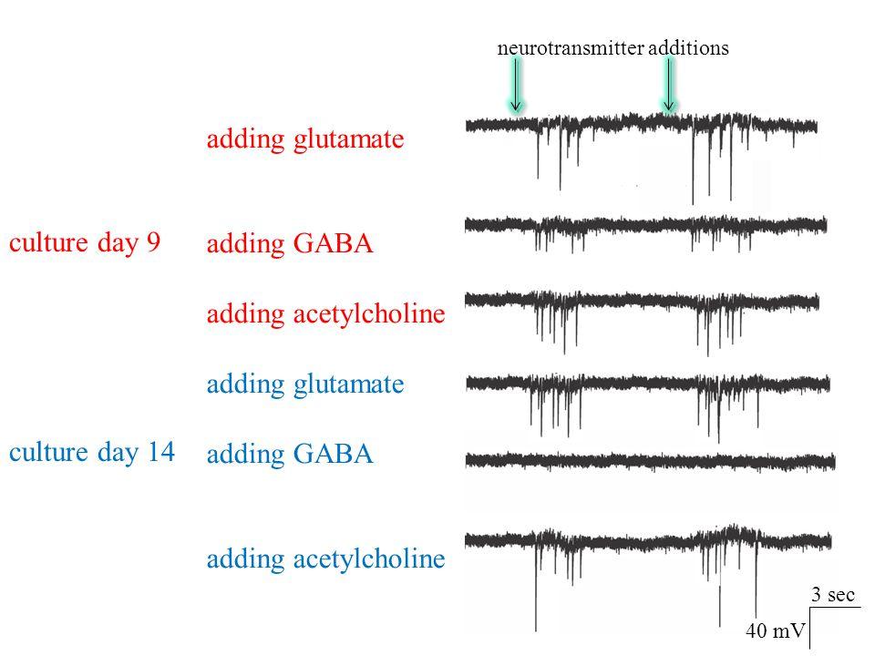 adding glutamate adding GABA adding acetylcholine adding glutamate adding GABA adding acetylcholine culture day 9 culture day 14 neurotransmitter addi