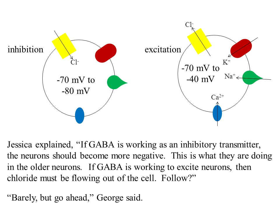 """excitationinhibition -70 mV to -80 mV -70 mV to -40 mV Cl - Na + K+K+ Ca 2+ Jessica explained, """"If GABA is working as an inhibitory transmitter, the n"""
