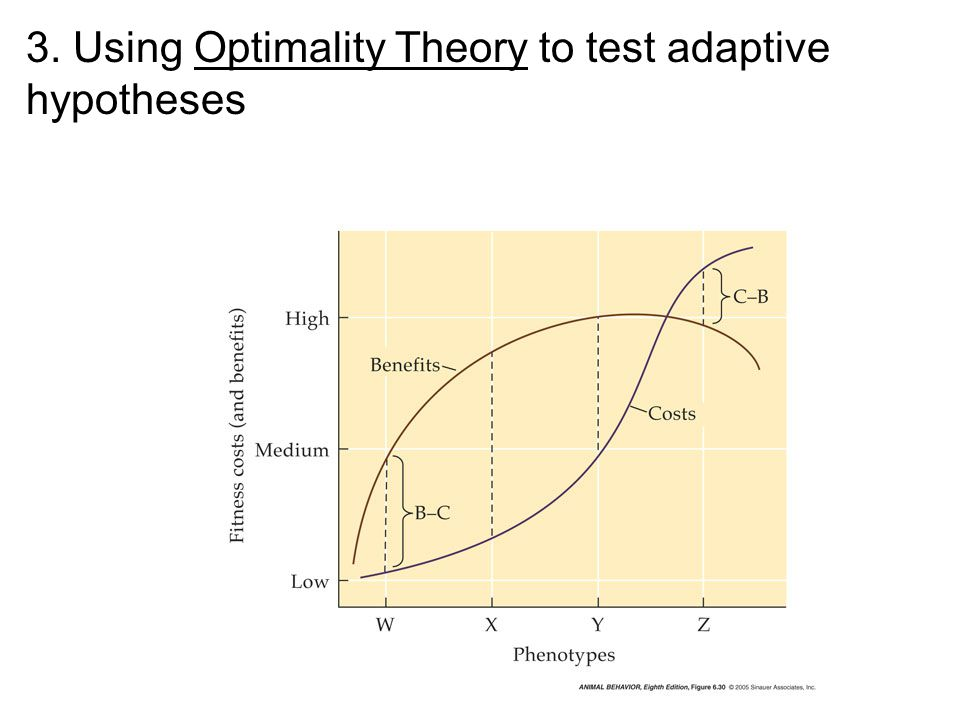 3. Using Optimality Theory to test adaptive hypotheses