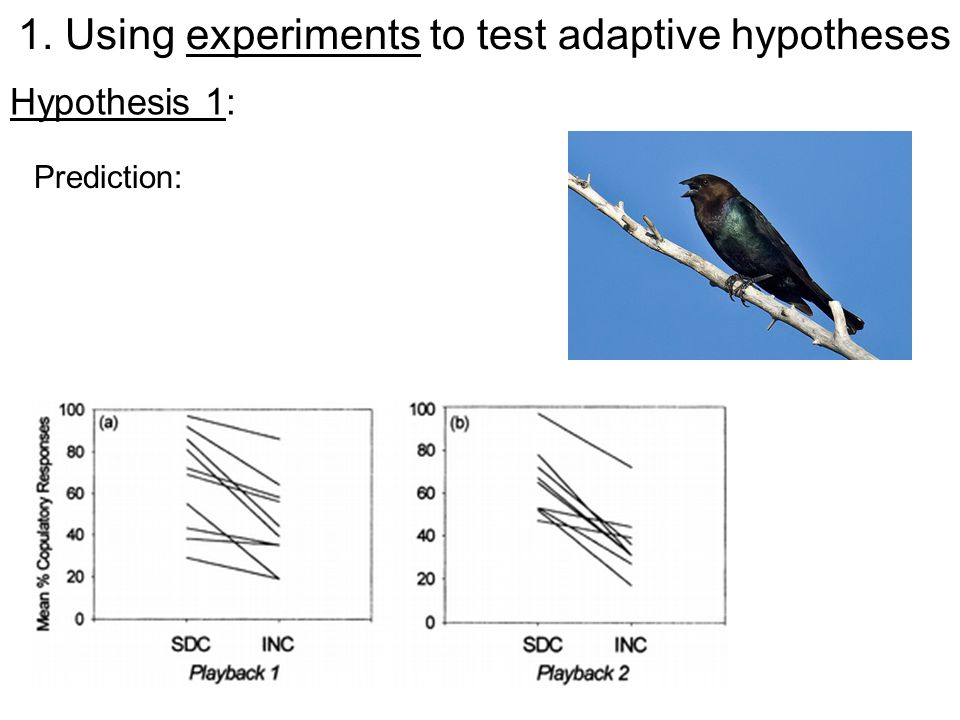 Hypothesis 1: Prediction: 1. Using experiments to test adaptive hypotheses