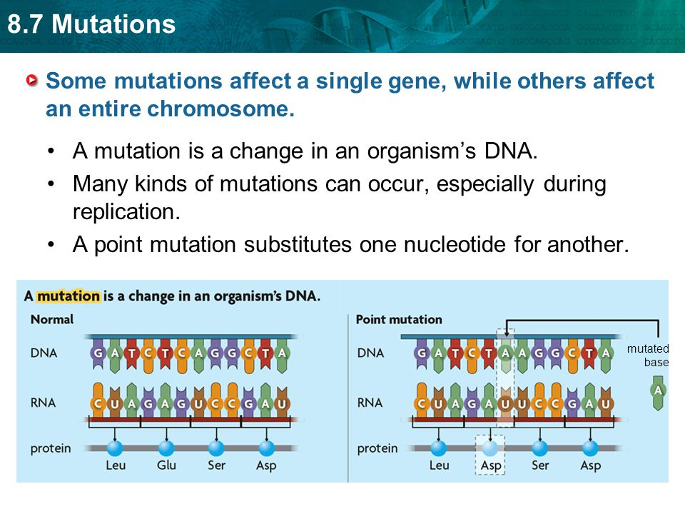 8.7 Mutations Many kinds of mutations can occur, especially during replication.