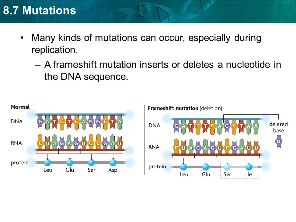 8.7 Mutations Many kinds of mutations can occur, especially during replication. –A frameshift mutation inserts or deletes a nucleotide in the DNA sequ