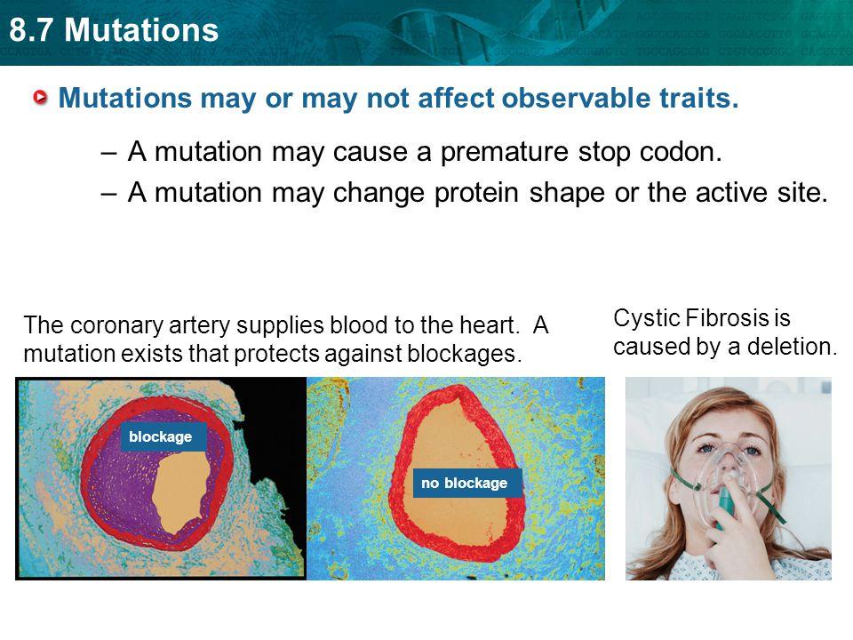8.7 Mutations Some gene mutations do not affect observable traits.