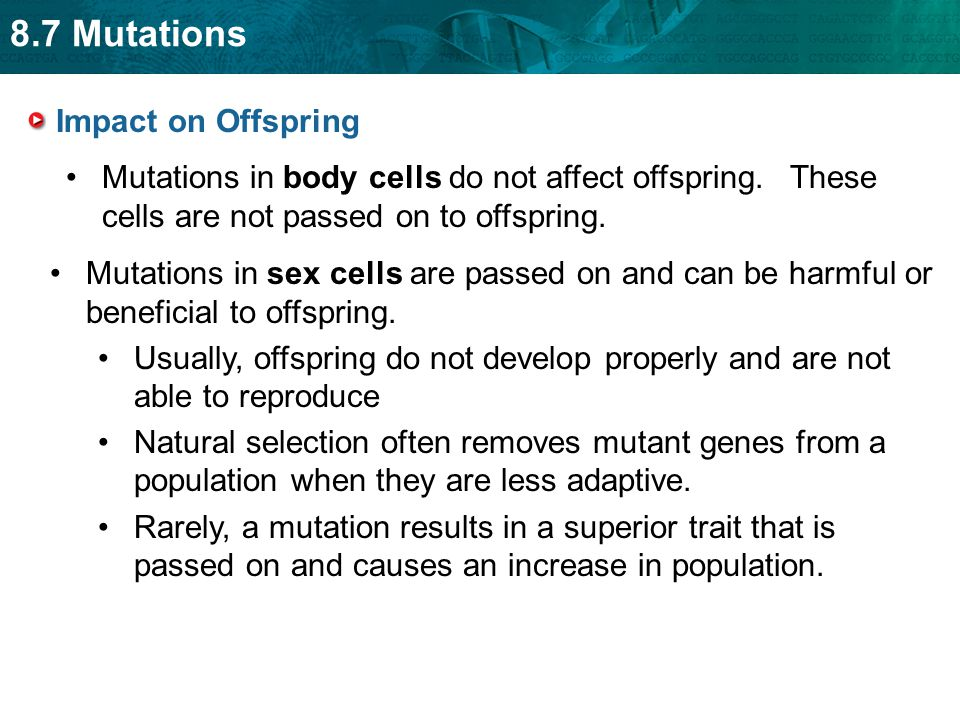 8.7 Mutations Mutations in body cells do not affect offspring. These cells are not passed on to offspring. Mutations in sex cells are passed on and ca