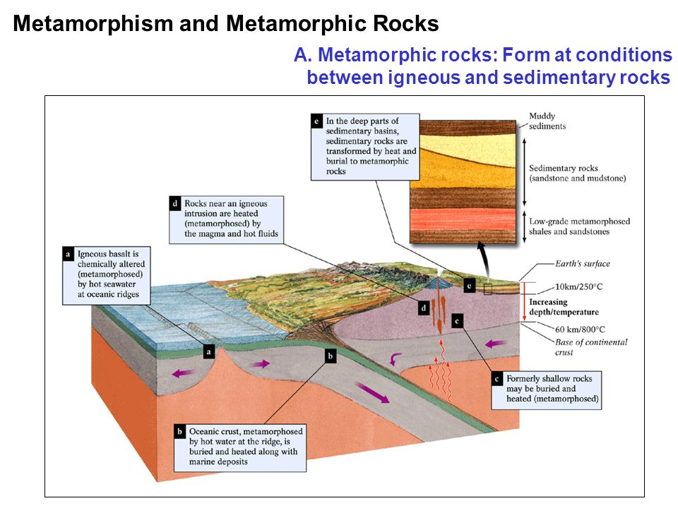 Definition Protolith: parent rock, what the rock was before it was metamorphosed Common Metamorphic Rocks