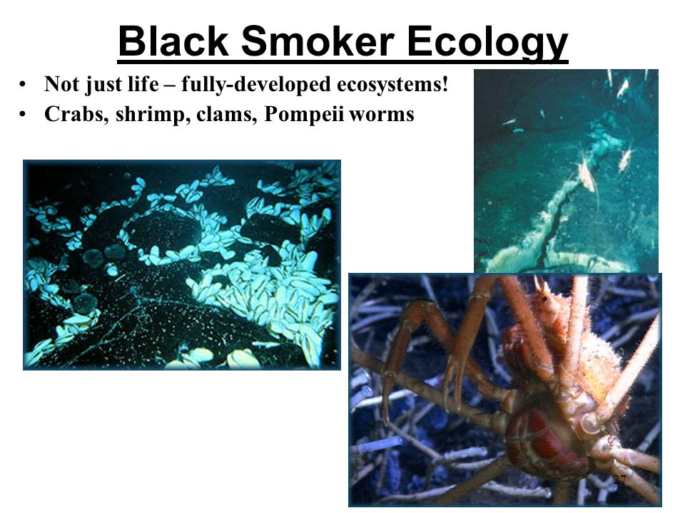 Black Smoker Ecology Not just life – fully-developed ecosystems.