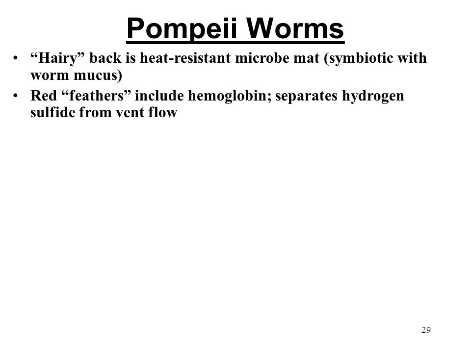 Pompeii Worms Hairy back is heat-resistant microbe mat (symbiotic with worm mucus) Red feathers include hemoglobin; separates hydrogen sulfide from vent flow 29