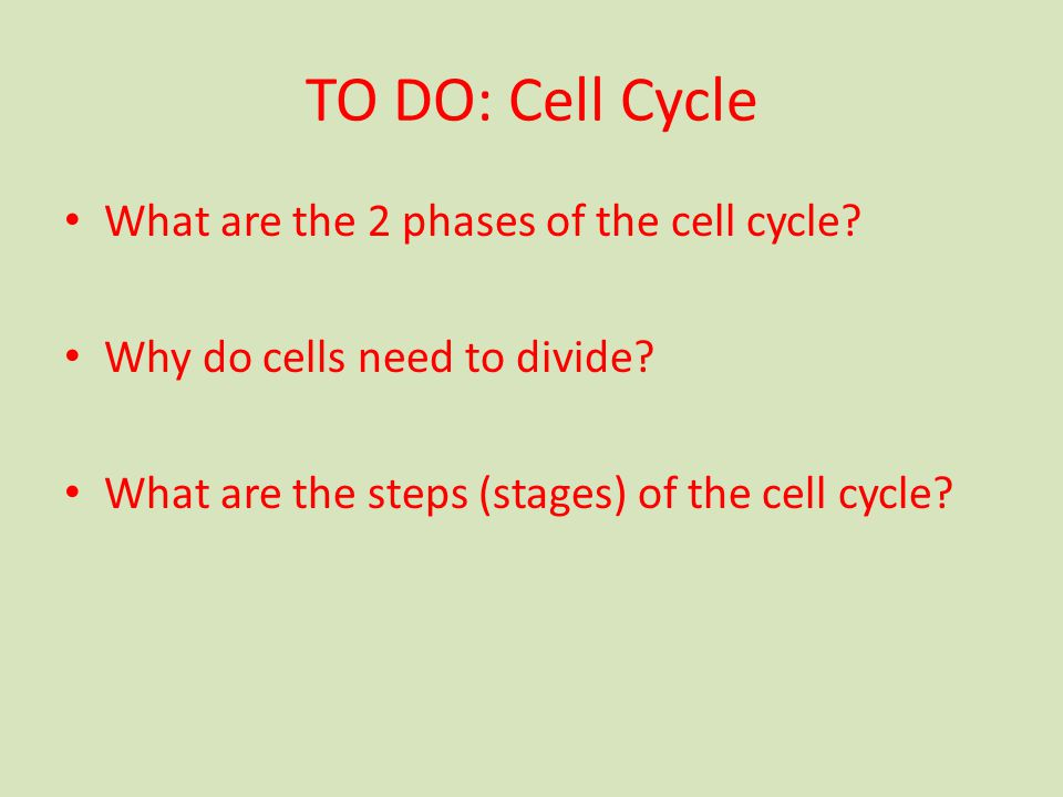TO DO: Cell Cycle What are the 2 phases of the cell cycle.