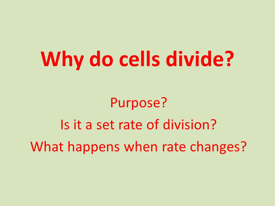 Why do cells divide Purpose Is it a set rate of division What happens when rate changes