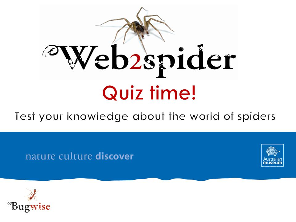 The answer is false.Lace webs don't contain sticky silk.