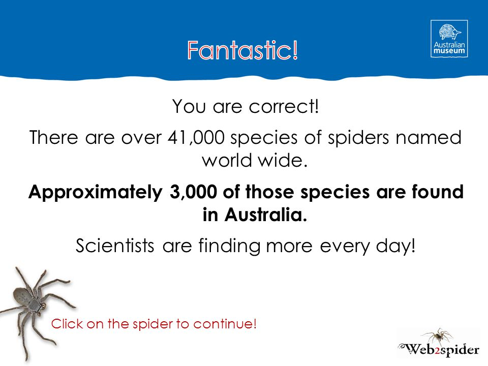 You are correct! There are over 41,000 species of spiders named world wide. Approximately 3,000 of those species are found in Australia. Scientists ar
