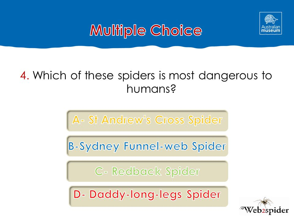 4. Which of these spiders is most dangerous to humans?