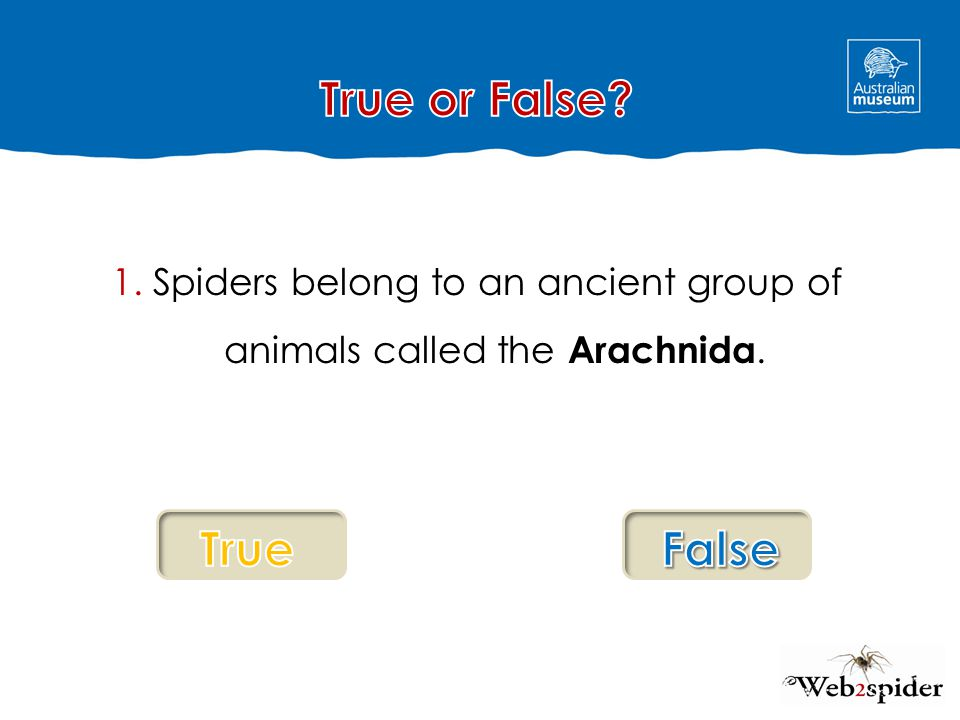 Fantastic work.It is true. Spiders do belong to the group called Arachnida.