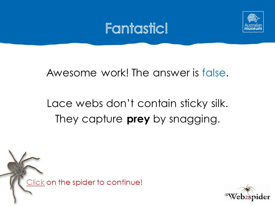 Awesome work! The answer is false. Lace webs don't contain sticky silk. They capture prey by snagging. Click on the spider to continue!