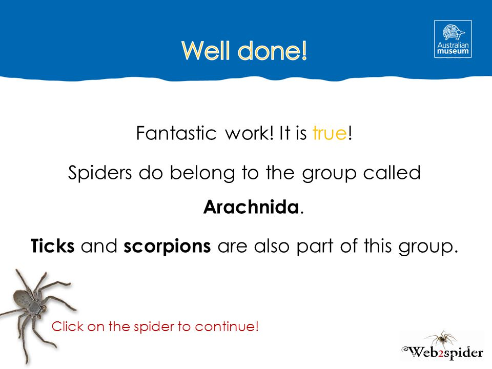 Fantastic work! It is true! Spiders do belong to the group called Arachnida. Ticks and scorpions are also part of this group. Click on the spider to c