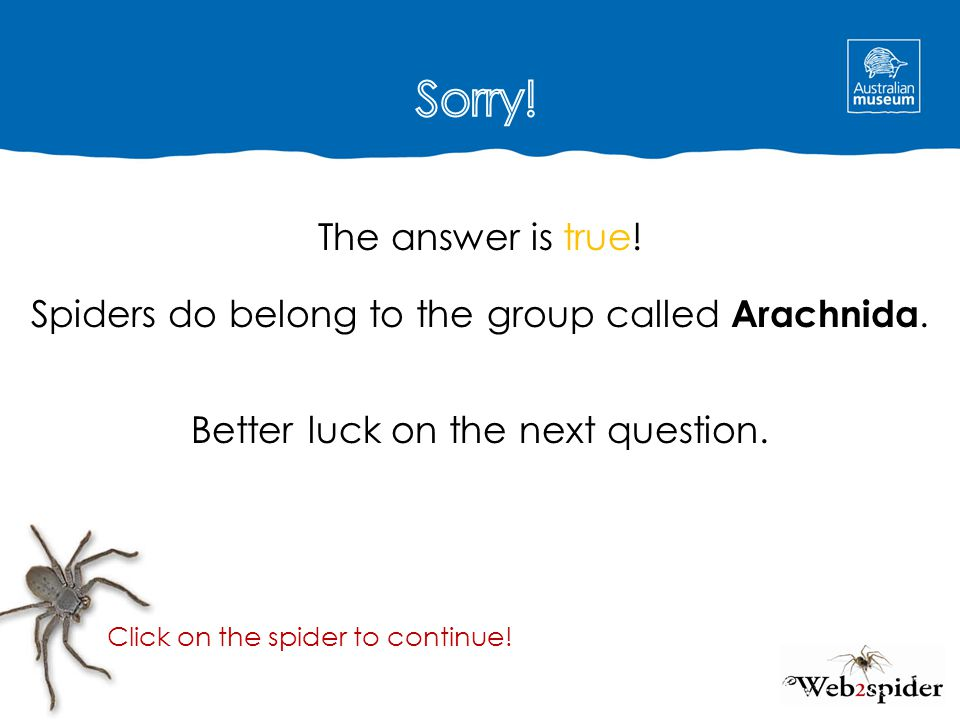 The answer is true! Spiders do belong to the group called Arachnida. Better luck on the next question. Click on the spider to continue!