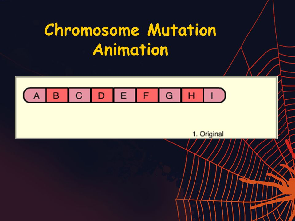 Chromosome Mutation Animation