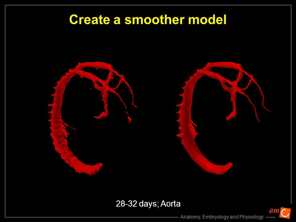 Anatomy, Embryology and Physiology Create a smoother model 28-32 days; Aorta