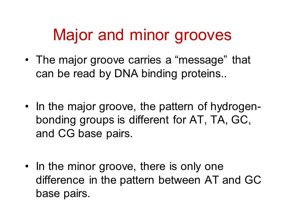 """The major groove carries a """"message"""" that can be read by DNA binding proteins.. In the major groove, the pattern of hydrogen- bonding groups is differ"""