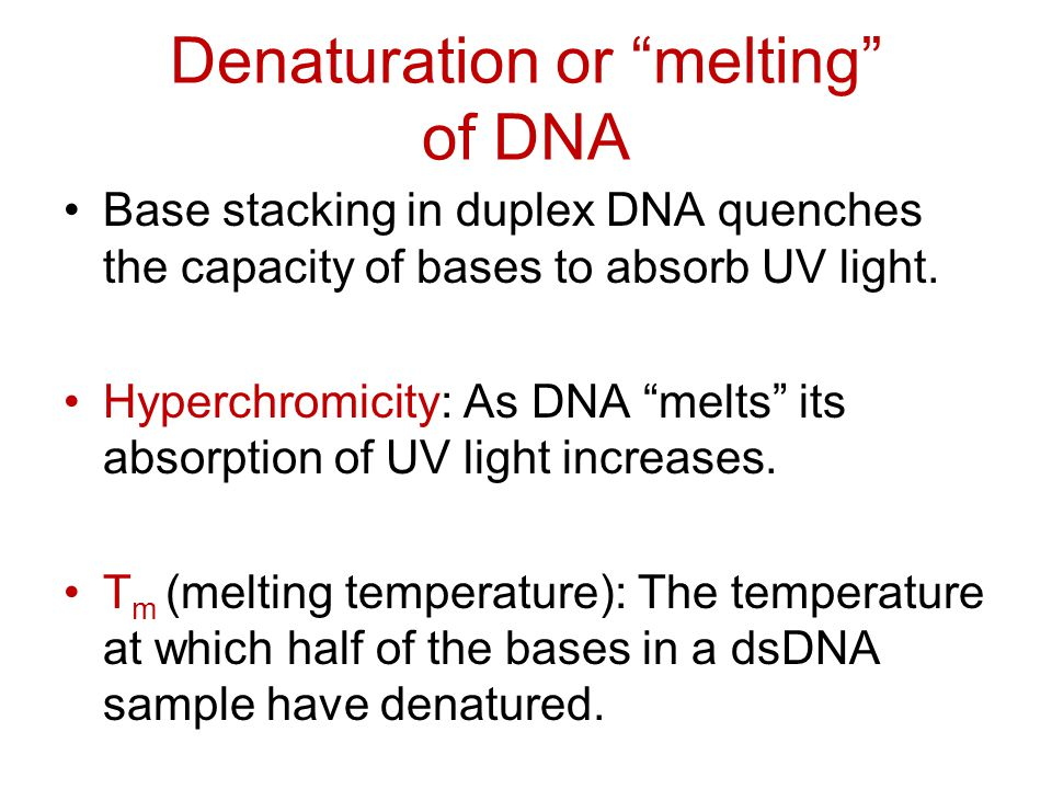 Denaturation or melting of DNA Base stacking in duplex DNA quenches the capacity of bases to absorb UV light.