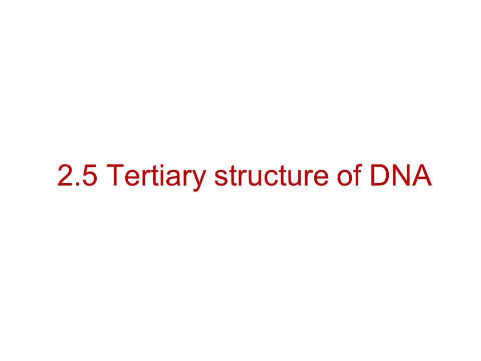 2.5 Tertiary structure of DNA