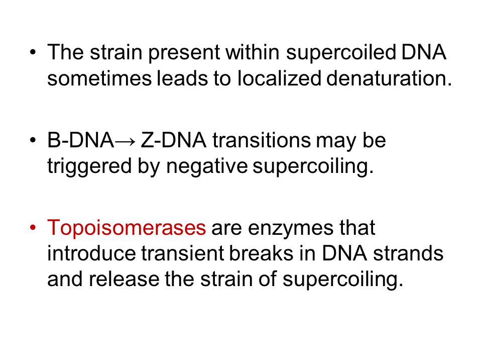 The strain present within supercoiled DNA sometimes leads to localized denaturation. B-DNA→ Z-DNA transitions may be triggered by negative supercoilin