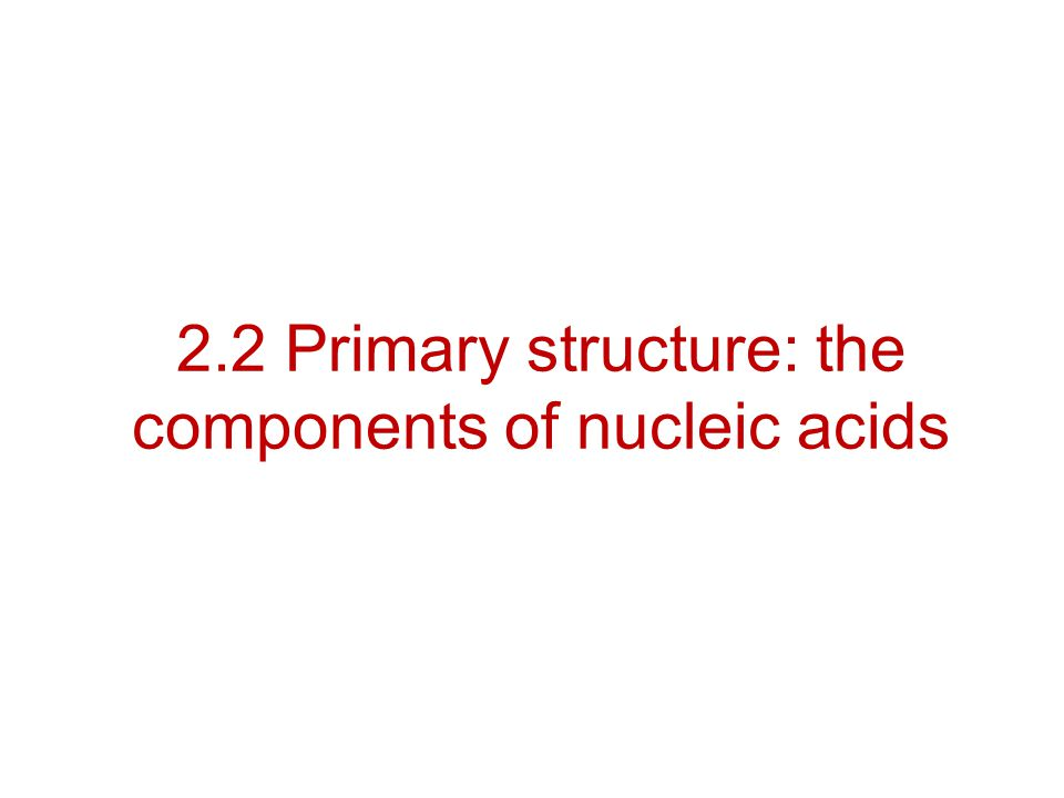 2.2 Primary structure: the components of nucleic acids