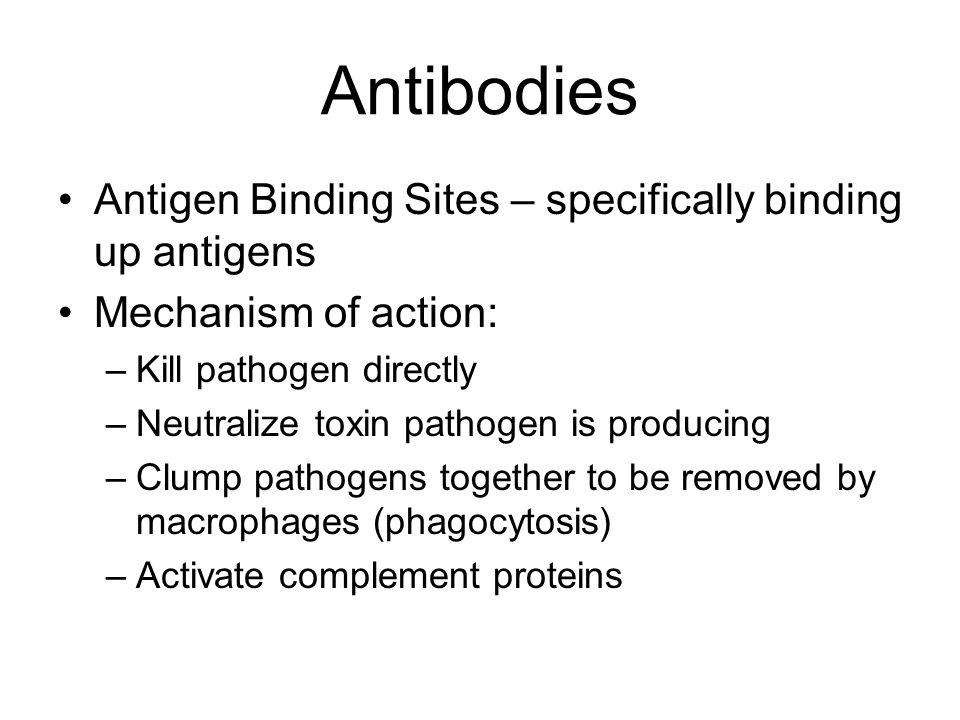 Antibodies Antigen Binding Sites – specifically binding up antigens Mechanism of action: –Kill pathogen directly –Neutralize toxin pathogen is produci