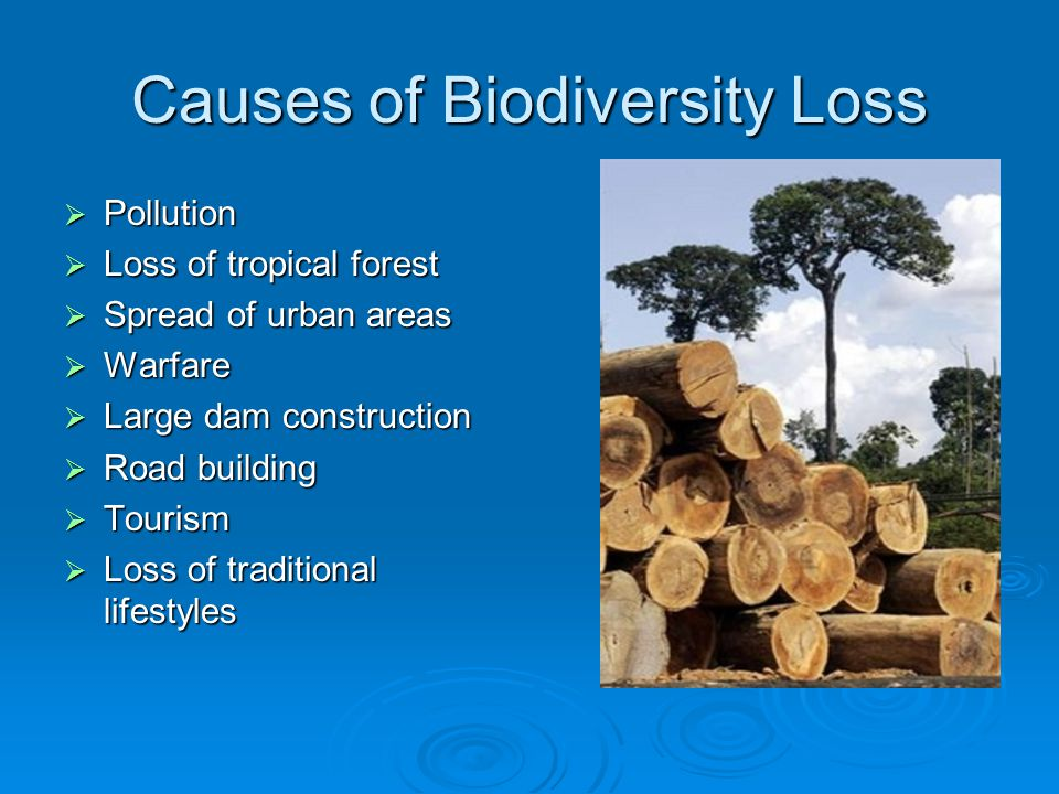 Causes of Biodiversity Loss  Pollution  Loss of tropical forest  Spread of urban areas  Warfare  Large dam construction  Road building  Tourism  Loss of traditional lifestyles
